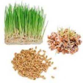 Trigo para germinar (500 gramos)