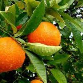 Naranjas  (Kilo) Depurativa